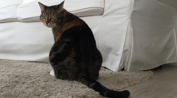 enlever l 39 odeur d 39 urine de chat que faire pour chasser cette odeur naus abonde. Black Bedroom Furniture Sets. Home Design Ideas